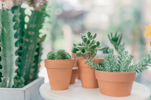 Indoor Plants: A step towards Clean and Green Interiors!